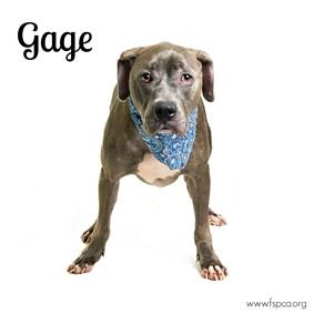 Gage 1