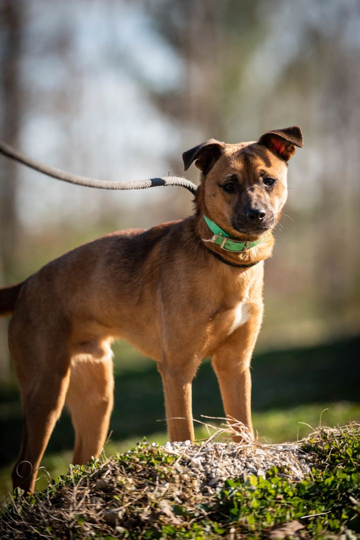Cheeko, an adopted Terrier Mix in Stanton, KY