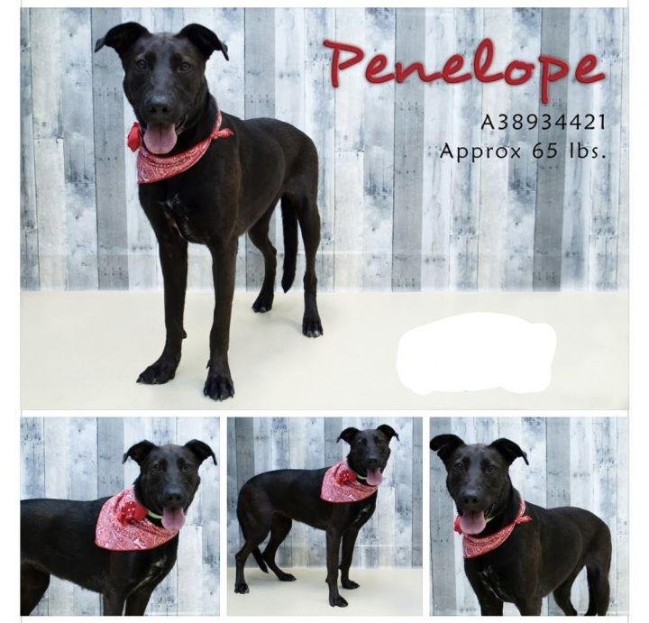 Penelope 2