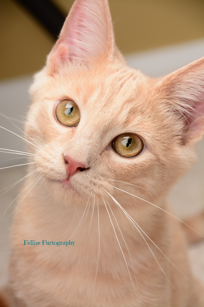 Tyler, an adopted Tabby Mix in Waxhaw, NC