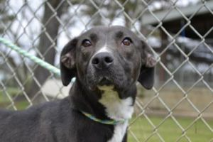 Dog for adoption - Ruby, a Collie Mix in Thomasville, GA