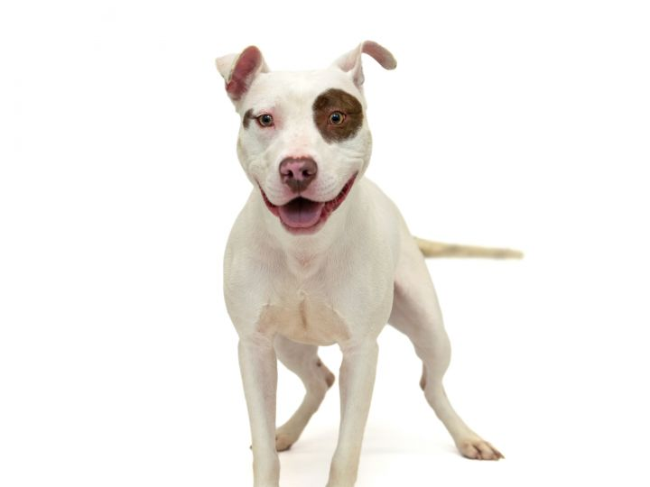 Libby, an adoptable Pit Bull Terrier Mix in Pawleys Island, SC