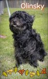 Scottish Terrier Scottie Dog: Olinsky