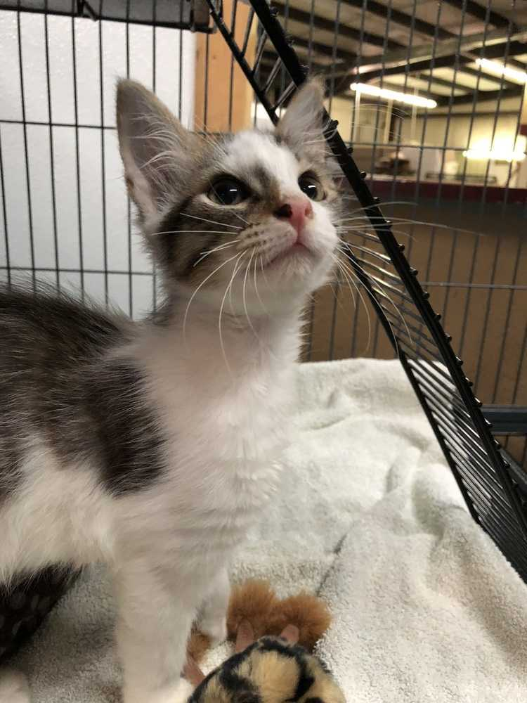 Cat For Adoption Larry Near Mooresville Nc Petfinder