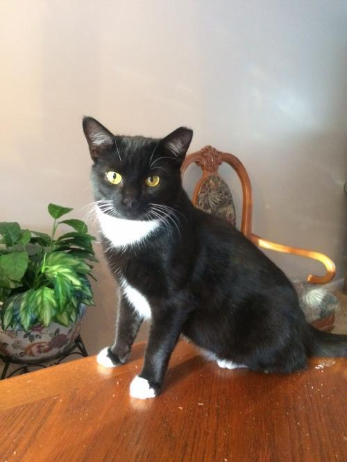 Mama Cats 1 & 2:bonded pair (FCID# 08/01/2017-127)