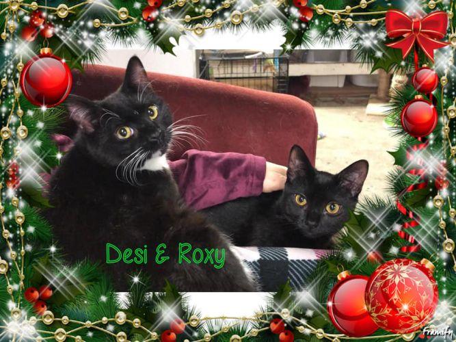 Desi & Roxy