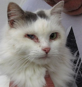 79d21f92c5 Cat for adoption - Paisley