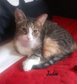 Judee