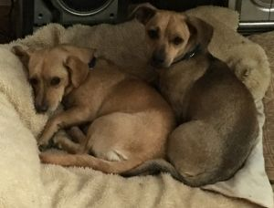 Tori & Twinkie*bonded sisters