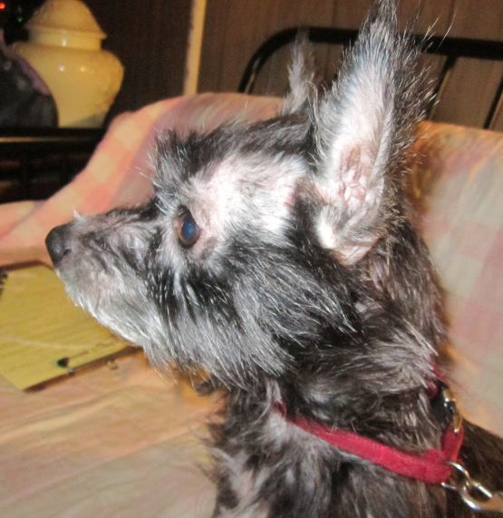 Dogs For Adoption Near Piscataway Nj Petfinder