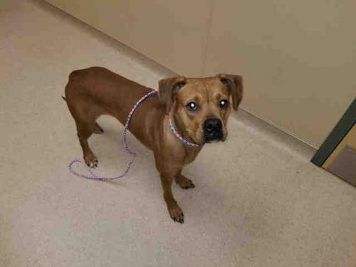 Dog For Adoption Gracie Near Clyde Nc Petfinder
