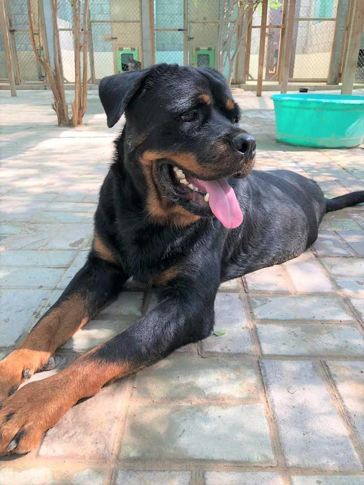 Dog For Adoption Nino Near Langley Bc Petfinder