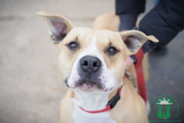 Magic (Fostered in Omaha) 6
