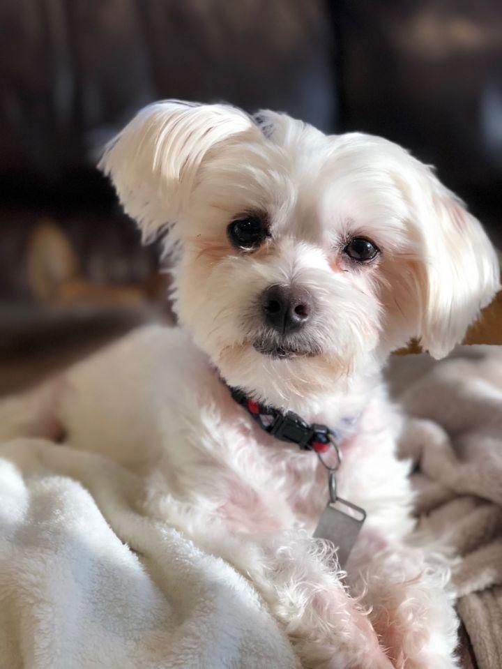 Dog For Adoption Honey Bunny Adoption Pending Near Mentor Oh