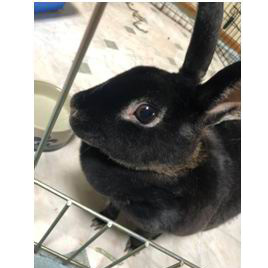 Rabbit For Adoption Angel Near Eau Claire Wi Petfinder