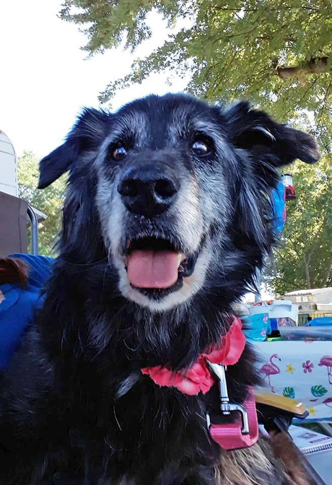 Oma, an adoptable Collie Mix in Kennewick, WA