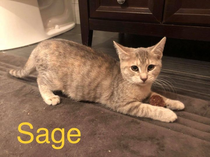 Sage 5