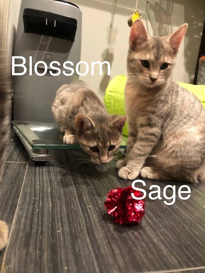 Sage 6