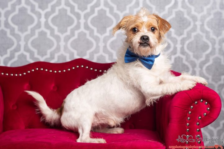 Blake Carrington, an adopted Wirehaired Terrier & Terrier Mix in Jersey City, NJ