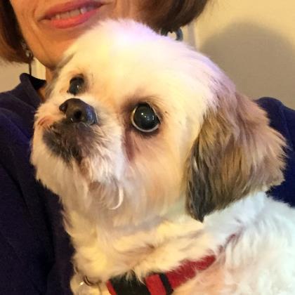 Dog For Adoption Precious Near Washington Dc Petfinder
