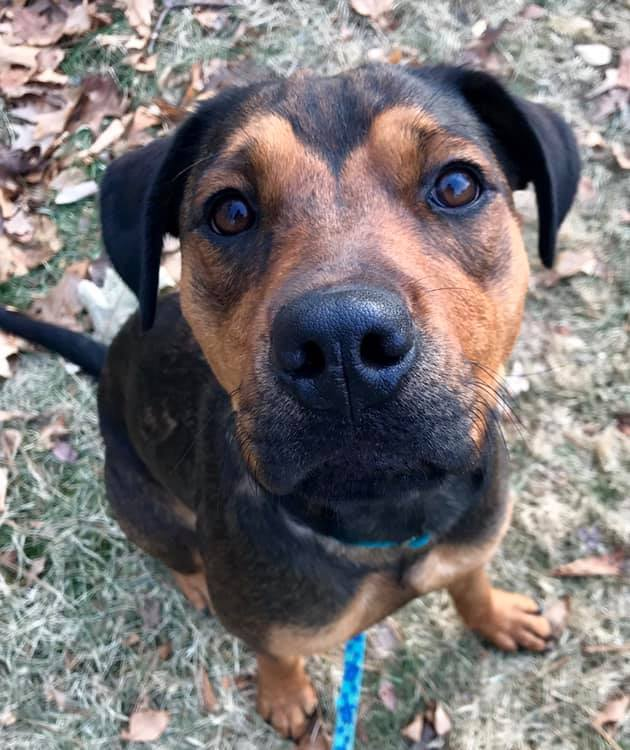 Ruby *HERE IN NH*, an adopted Mixed Breed in Northwood, NH