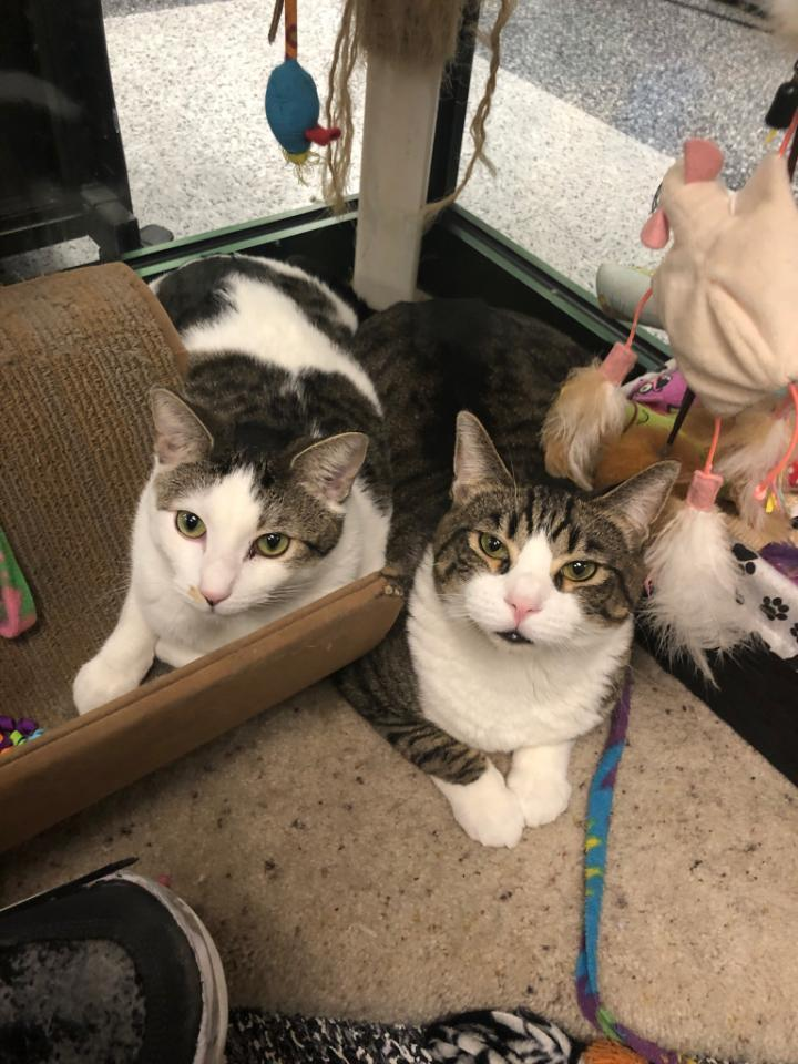 Tommy & Titan - A Purrfect Pair 1