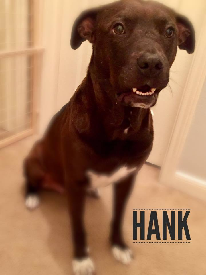 Hank 2
