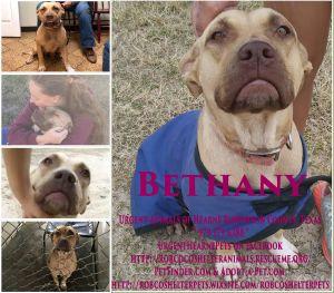 Bethany Black Mouth Cur Dog