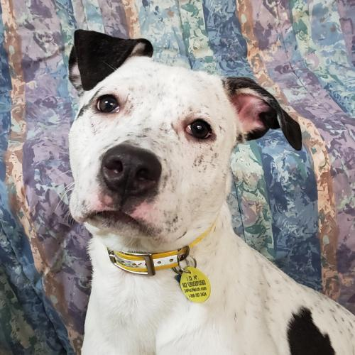 Dog For Adoption Pinwheel Near Akron Oh Petfinder