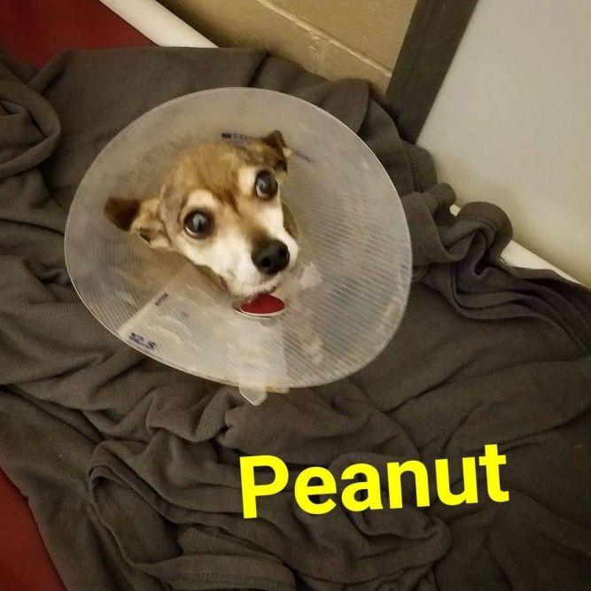 Peanut*Rebound*