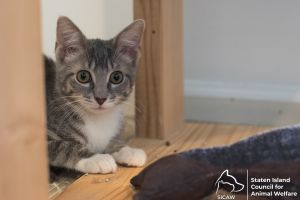 Grey (foster home)