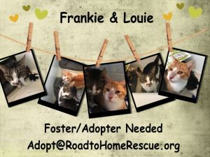 Frankie & Louie