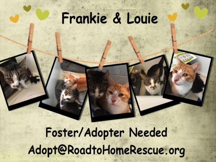 Frankie & Louie 2