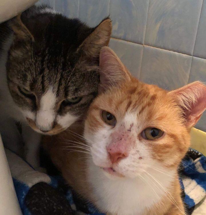 Frankie & Louie 3