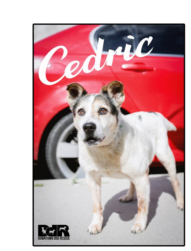 Cedric- forever foster!
