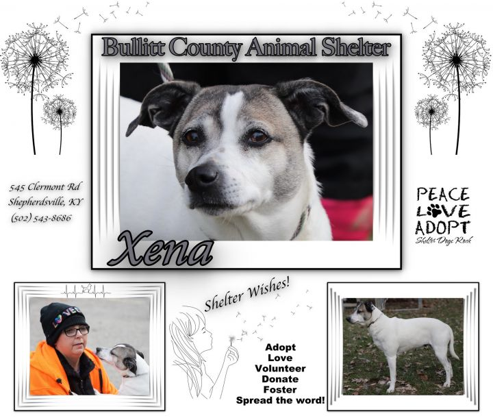 Xena, an adopted Terrier Mix in Shepherdsville, KY