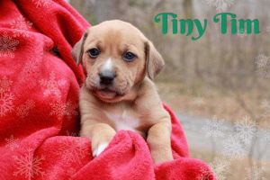 Tiny Tim Yuletide