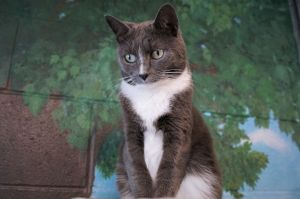 Shana was found as a stray She is quite shy as she has not had much socialization being out on