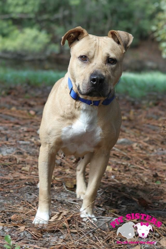 Teriyaki, an adoptable Mixed Breed in Jacksonville, FL