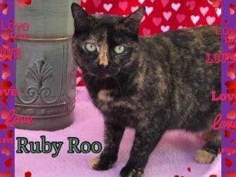 Ruby Roo, an adoptable Domestic Short Hair & Tortoiseshell Mix in Yucaipa, CA