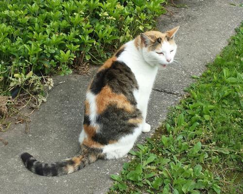 Kelly: Barn Cat (FCID# 05/25/2017 - 201)