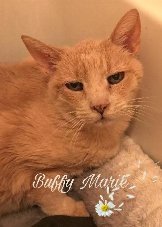 BUFFY MARIE 1