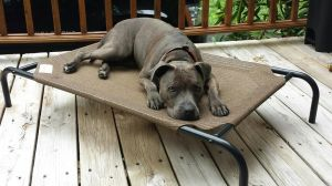 You can fill out an adoption application online on our official websiteOur precious girl Willow is