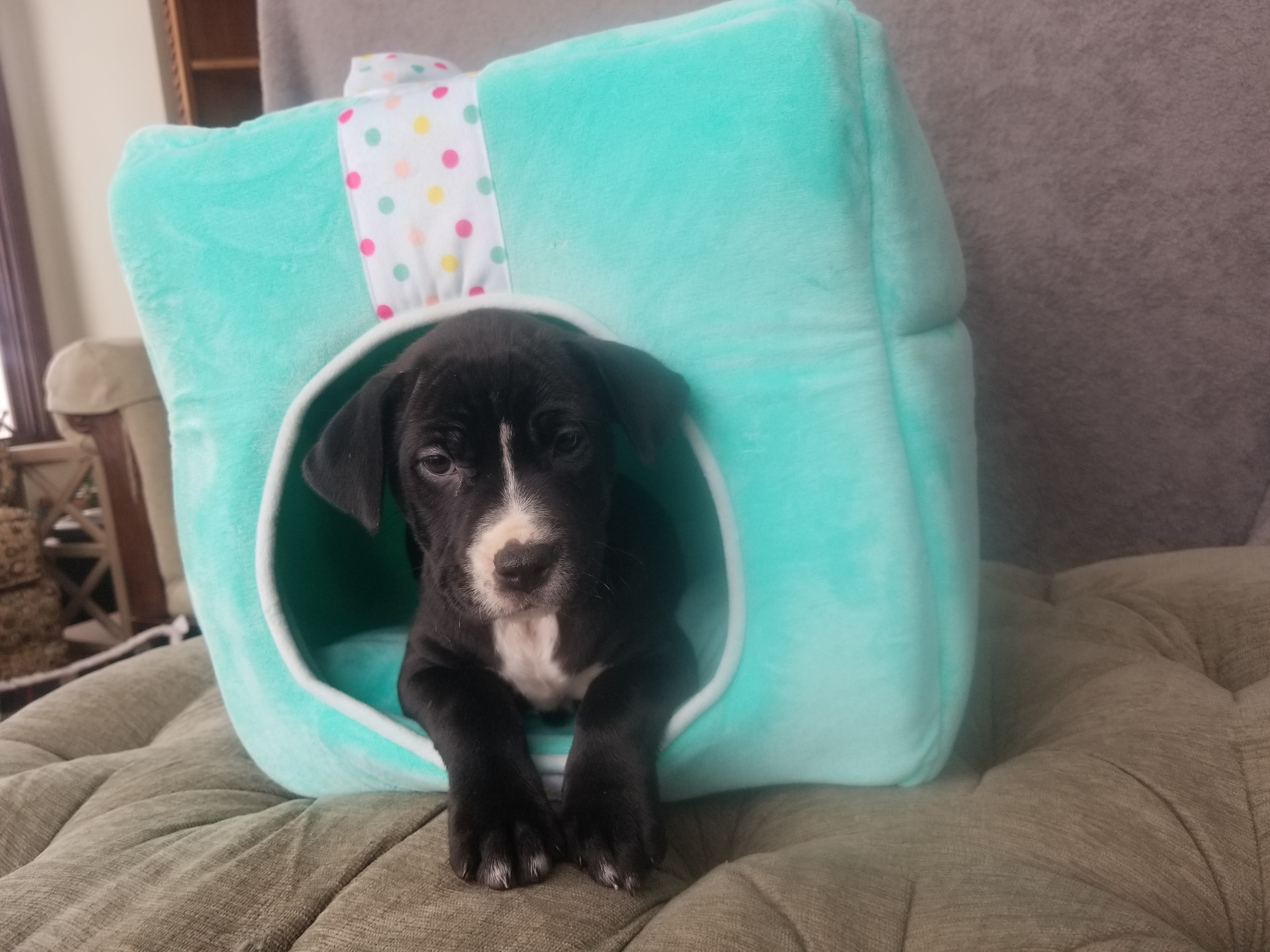 Pets For Adoption Near Des Moines Ia Petfinder