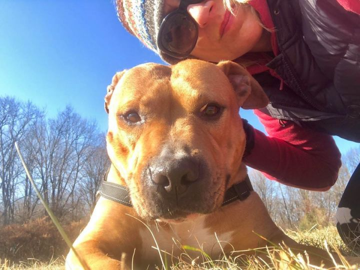 Mush, an adopted Terrier & Rhodesian Ridgeback Mix in Mendham, NJ