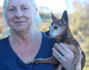 Lyle Chihuahua Dog