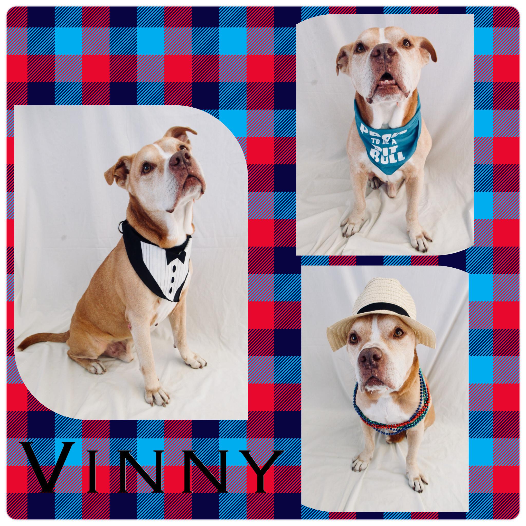 Dog for adoption - Vinny - Pawsitive Direction Program, a