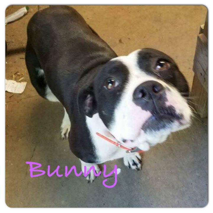 Bunny, an adoptable Beagle Mix in Tunica, MS_image-1