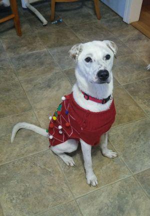 Moxie - A Miracle Dog