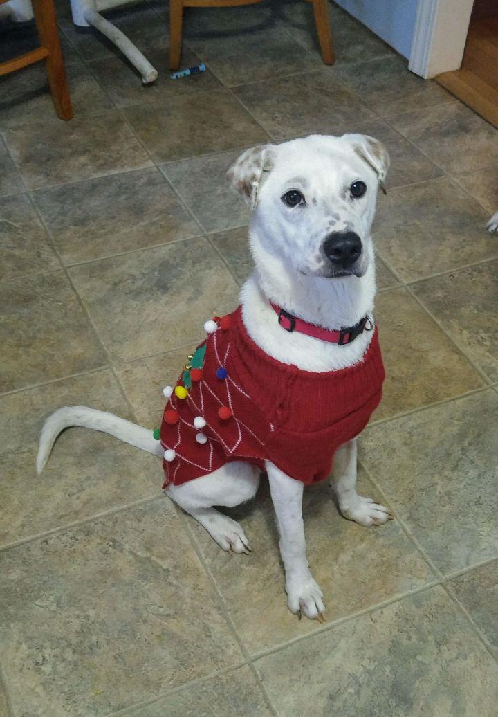 Moxie - A Miracle Dog 2